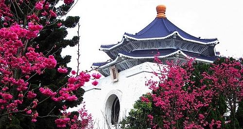 中正記念堂桜