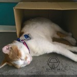 台湾・猫空ロープウェイに「猫駅長」誕生