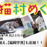 辰巳出版「猫びより」編集部が徹底プロデュースした、猫写真家沖 昌之と行く、猫たちの村を巡るツアー【台湾 猫村めぐり3日間】の旅